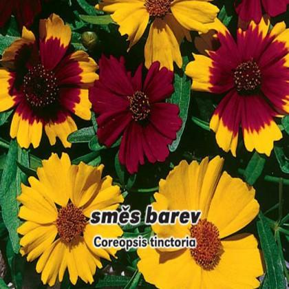 Krásnoočko dvoubarevné - Směs barev - semena 0,4 g