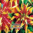 Laskavec trojbarevný - Perfecta - semena 0,2 g