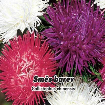 Astra vysoká k řezu - Směs barev - semena 0,5 g