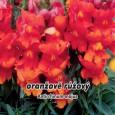 Hledík větší - Oranžově růžový - semena 0,1 g