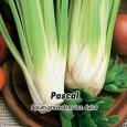 Celer řapíkatý - Pascal - semena 400 ks