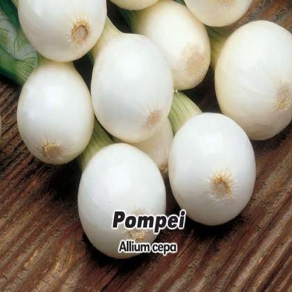 Cibule jarní lahůdková - Pompei 1,- semena 5 g