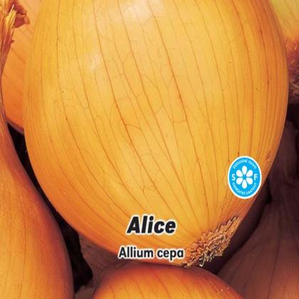 Cibule jarní žlutá - Alice - semena 2 g