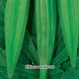 Ibišek jedlý - Okra - semena 4 g