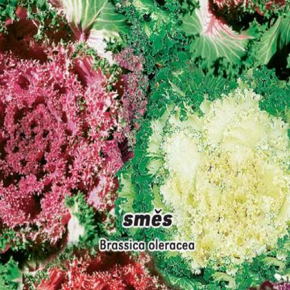Kapusta - okrasná směs - semena 0,4 g
