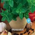 Dobromysl obecná - semena 0,2g