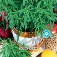 Saturejka Zahradní - semena 0,3 g