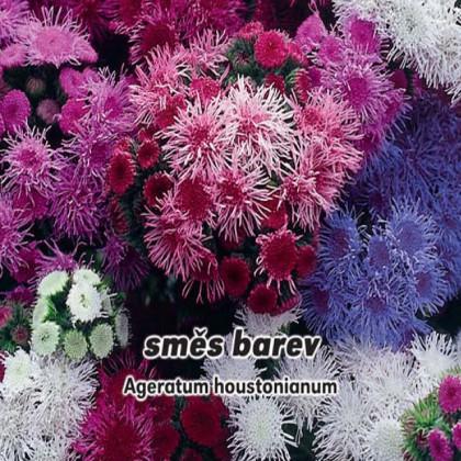 Nestařec Mexický - Směs barev - semena 0,2 g