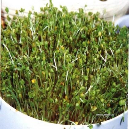 Klíčky - Brokolice - Bio osivo 2- semena 5 g