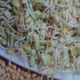 Klíčky - Fazole - Bio klíčky - semena 50 g