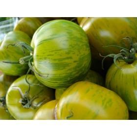 Rajče Zelená Zebra ( prazelenina: Solanum lycopersicum ) cca 15 semen