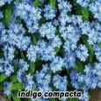 Pomněnka lesní-Indigo - semena 0,2 g