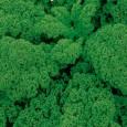 Kadeřávek (Brassica oleracea) semena 0,8g