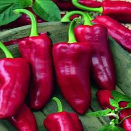 Paprika zeleninová -kapie-Parade - semena 0,3 g