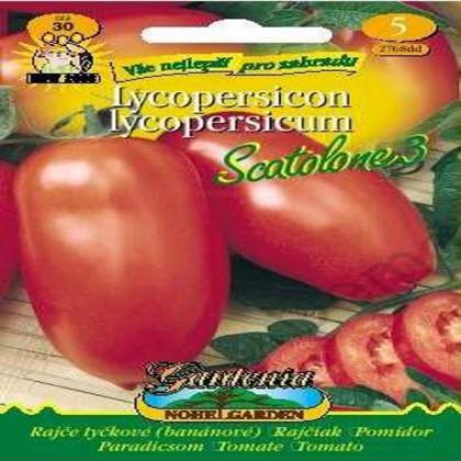 Rajče tyčkové-banánové-Scatolone - semena 30 ks