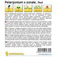 Pelargonium zonale červené