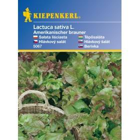 hlávkový salát Amerik. - semena salátu listového