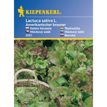 Listový salát Amerik. - semena salátu listového