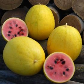 Meloun Golden Midget - zlatý (Citrullus lanatus) 5 semen