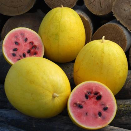 Meloun Golden Midget - zlatý (Citrullus lanatus ) 10 semen