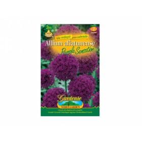 Supervit 10ml